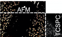 overlay of AFM and TCSPC data